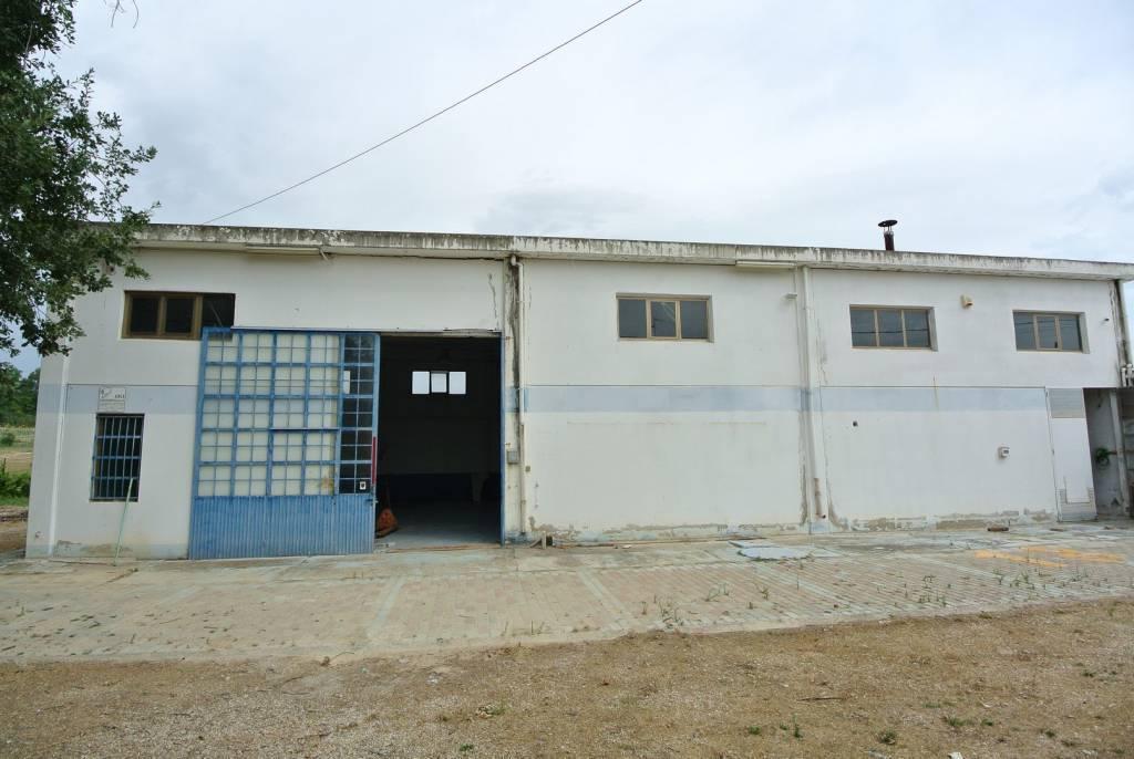 Rental Local Collecorvino