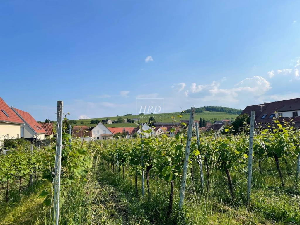 Vente Terrain constructible Scharrachbergheim-Irmstett