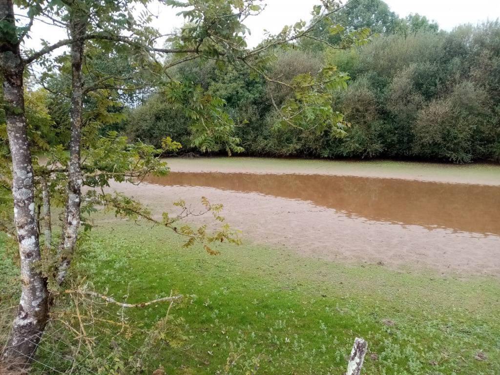 Boisé et étang à rénover