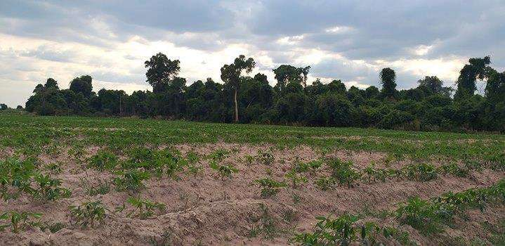 4.5 farm land for sell at Peak Snaeng commune Angkor Thum district