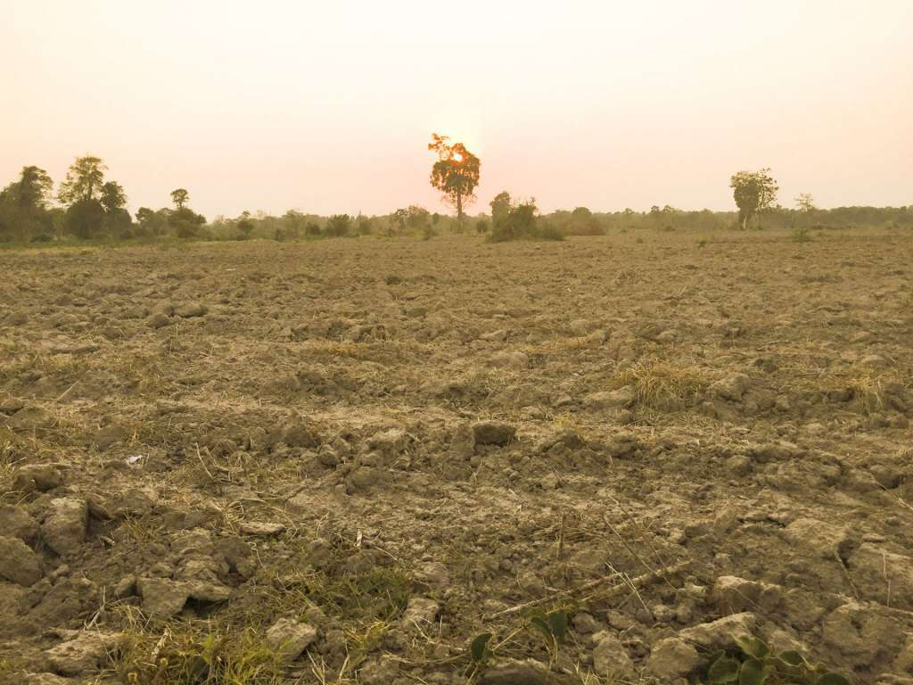 8 hectares farm land at Chub Ta Trav commune Angkor Thum district Siem Reap provinces