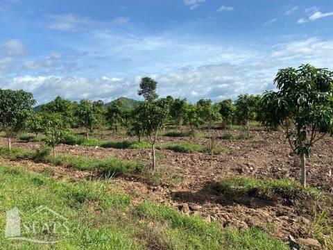 Sale Commercial land Kampot