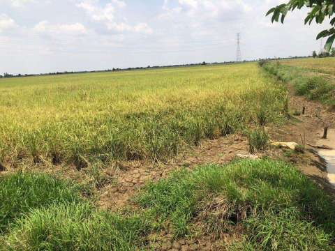 Sale Commercial land Moung Ruessei